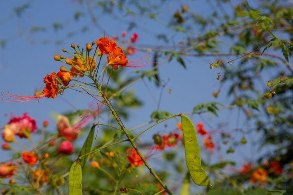 sivananda-gudur-ashram-information-general-information-1